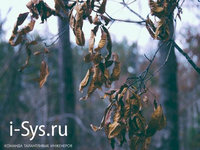 October-dead-trees